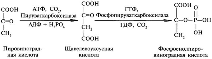 Далее, от лимонной кислоты поочередно отщепляются две молекулы с02 и четыре пары атомов водорода и вновь образуется